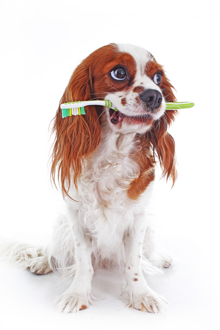 dog with a toothbrush